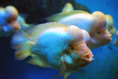 Tropical marine fish stock photo