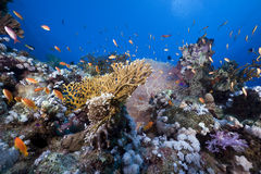 Tropical marine life in the Red Sea. Stock Photo