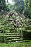 Tropical maya stairs. Green antique mayan stair in tropical forest Stock Images