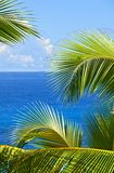 Tropical melody Royalty Free Stock Photo