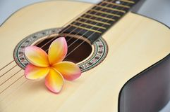 Tropical melody Royalty Free Stock Photos