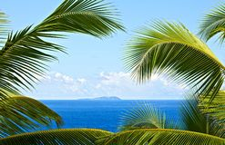 Tropical melody Royalty Free Stock Photo