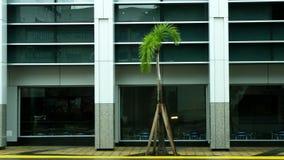 tropical metro palm tree stock image