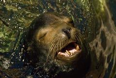 Tropical Mexico seal Stock Photo
