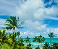 Tropical Miami beach palms near the ocean Royalty Free Stock Image