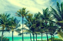 Tropical Miami beach palms near the ocean, retro styled Royalty Free Stock Photography