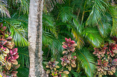 Tropical Mix Stock Photography