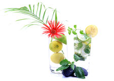 Tropical mojito drink Stock Photography