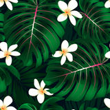 Tropical Monstera floral seamless pattern Royalty Free Stock Images