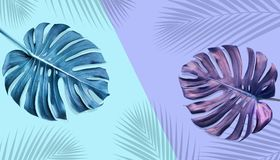 Tropical monstera leaves with palm shadow on pastel color. Background.Nature and holiday summer concepts.Floral elements stock illustration