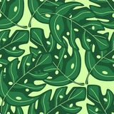 Tropical monstera leaves seamless repeat pattern . Exotic plant vector illustration