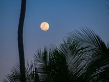 Tropical moonlight Royalty Free Stock Photo