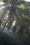 Tropical morning, coconut palm trees in the morning in Arambol, Royalty Free Stock Photos
