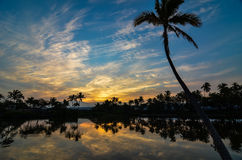 Tropical Morning. Morning sunrise on the Big Island of Hawaii with palm trees reflecting in the water Stock Image