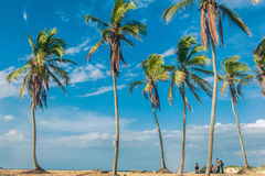 Tropical mountain forest, palm trees in sunlight Stock Photo