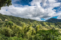 Tropical mountain landscape with palms and green vegetation. Tropical mountain landscape with palms and blue sky with fluffy white clouds Stock Photo