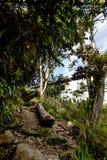 Tropical Mountain Trail Stock Photos