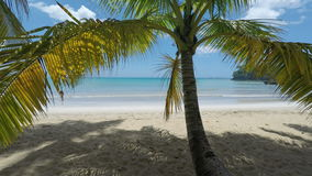 Tropical and natural Caribbean beach near samana stock footage