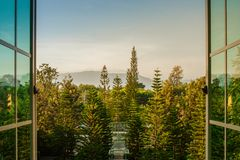 Tropical natural view of green pine trees throughout from opened window. royalty free stock image