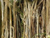 Tropical Nature Stock Photos