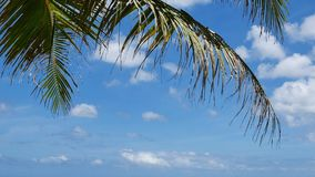 Tropical nature as background. Palm tree leaves and blue cloudy sky stock video
