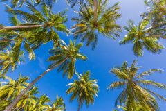 Tropical nature background. Palm trees and blue sky concept for vacation or summer holiday design. Palm trees and blue sky, looking up concept. Tropical Royalty Free Stock Photos