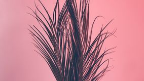 Tropical nature conceptual design palm foliage. Tropical nature conceptual design. Palm leaves foliage. Coral colored background stock photography