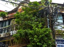 Nature regaining the city. Hanoi old city center, Vietnam
