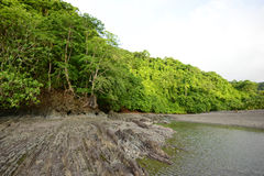 Tropical nature in Panama with trees and ocean Stock Photography