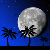 Tropical night Stock Photos