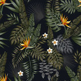 Tropical night seamless pattern black background. Tropical leaves and flowers in the night style for men`s prints. Seamless vector jungle wallpaper pattern black Stock Photography