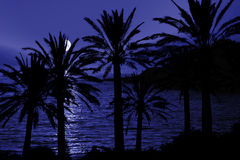 Tropical Night Silhouette. Full moon in a tropical location.  Palm trees are in silhouette Royalty Free Stock Photography