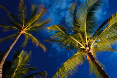 Tropical Night Sky Stock Images