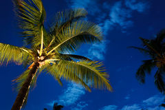 Tropical Night Sky Royalty Free Stock Photo