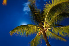 Tropical Night Sky Stock Photo
