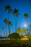Tropical night sky, palm trees Stock Images