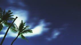 Tropical Night Sky Stock Photos