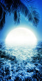 Tropical night Royalty Free Stock Images