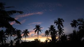 Tropical night view of palm trees and sunset sky. Tropical night view of palm trees silhouettes and sunset sky Royalty Free Stock Images