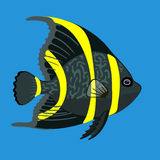 Tropical ocean angel fish, vector illustration Royalty Free Stock Image