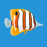 Tropical ocean butterfly fish, vector illustration Stock Photography