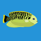 Tropical ocean fish, vector illustration Stock Images