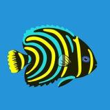 Tropical ocean fish, vector illustration Stock Photos