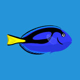 Tropical ocean surgeon fish, vector illustration Royalty Free Stock Images