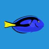 Tropical ocean surgeon fish, vector illustration Royalty Free Stock Photo