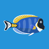 Tropical ocean surgeon fish, vector illustration Stock Photos
