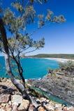 Tropical oceanic bay; Australia. Beach view with eucalyptus trees and a white sand beach at Noosa Heads Park, Australia stock photos