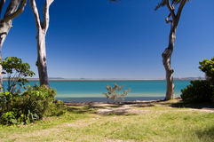 Tropical oceanic bay and eucalypus tree; Australia. Shallow tropical bay framed by eucalyptus trees and clear tropical skies at Noosa Heads Park, Australia stock photos