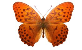 Tropical orange butterfly with a beautiful pattern. isolated on white background stock illustration