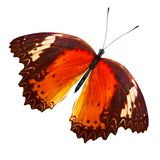 Tropical orange butterfly. isolated on white background. Orange butterfly. isolated on white background stock photos